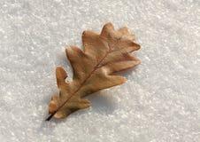 在第一雪的橡木叶子 免版税库存照片