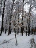 在第一雪的秋天树 库存照片