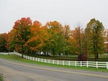 在第92条街道上的秋天颜色 免版税库存图片