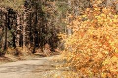 在第4的精采秋天颜色7月峡谷新墨西哥 免版税库存照片