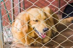 在笼子后的狗 库存照片