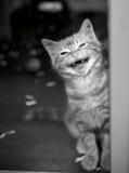 在笼子哭泣的小猫 免版税图库摄影