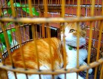 在笼子的一只黄色和白色可爱的猫 库存照片