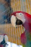 在笼子的五颜六色的鹦鹉在动物园里 免版税库存照片