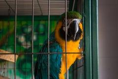 在笼子的五颜六色的鹦鹉 免版税库存照片