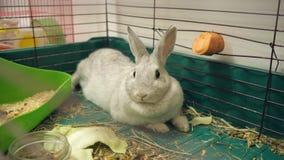在笼子的兔子 影视素材