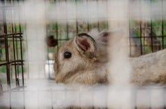 在笼子的兔子 库存照片