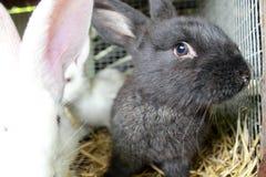 在笼子的兔子 免版税库存图片