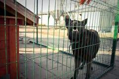 在笼子的单独狗 图库摄影