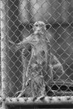 在笼子的单独猴子 库存照片