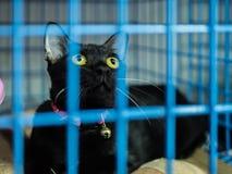 在笼子的孤独的猫 库存图片