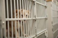 在笼子的小狗 免版税库存图片