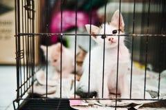 在笼子的小猫 免版税库存照片