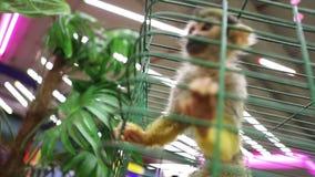 在笼子的小的愉快的猴子,特写镜头 影视素材