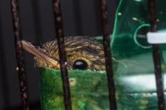 在笼子的幼鸟 图库摄影