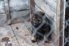 在笼子的护羊狗小狗 免版税库存照片