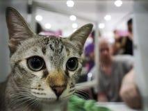 在笼子的未认出的猫发现一个新的家 库存图片