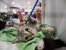 在笼子的未认出的猫发现一个新的家 免版税库存照片