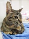 在笼子的未认出的猫发现一个新的家 免版税库存图片