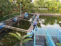 在笼子的格栅鱼在一个农场在泰国 免版税库存图片