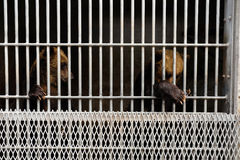 在笼子的熊 免版税图库摄影