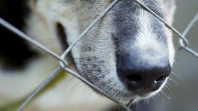 在笼子的狗在动物庇护所 股票录像