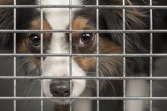 在笼子的狗 免版税库存图片