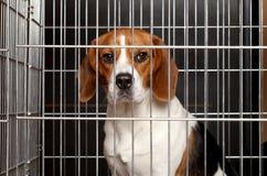 在笼子的狗 免版税库存照片