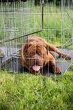 在笼子的狗 库存图片