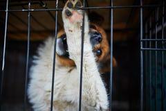 在笼子的狗 库存照片