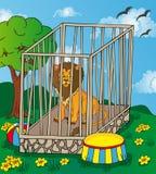 在笼子的狮子 库存图片