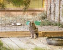 在笼子的猫头鹰 库存图片