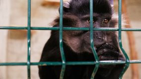 在笼子的猴子 股票录像
