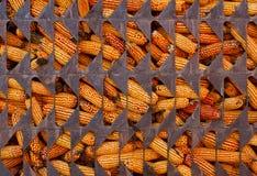 在笼子的玉米 免版税库存照片