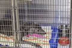 在笼子的病的狗 免版税库存照片