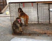 在笼子的短尾猿 免版税库存照片