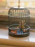 在笼子的蟋蟀 免版税库存图片
