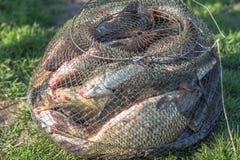在笼子的被抓的鱼 库存图片