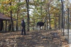 在笼子的驼鸟与工作者在动物园博尔01里 免版税库存图片