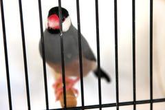 在笼子的鸟 库存照片