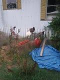 在笼子的鸡 免版税图库摄影