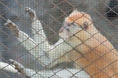在笼子的猴子 免版税库存图片