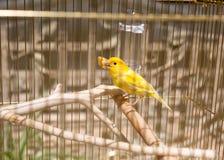 在笼子的黄色 免版税库存照片