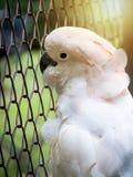 在笼子监禁的不快乐的鸟 免版税库存照片