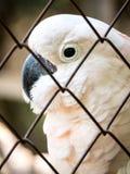 在笼子监禁的不快乐的鸟 免版税图库摄影