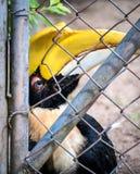 在笼子监禁的不快乐的鸟 库存图片