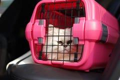 在笼子载体的猫 免版税库存照片