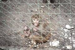在笼子里面的哀伤的猴子 免版税库存照片