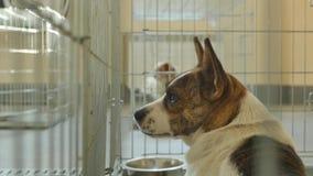在笼子锁的哀伤的狗 影视素材