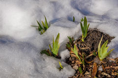 在等候早期的春天 库存照片